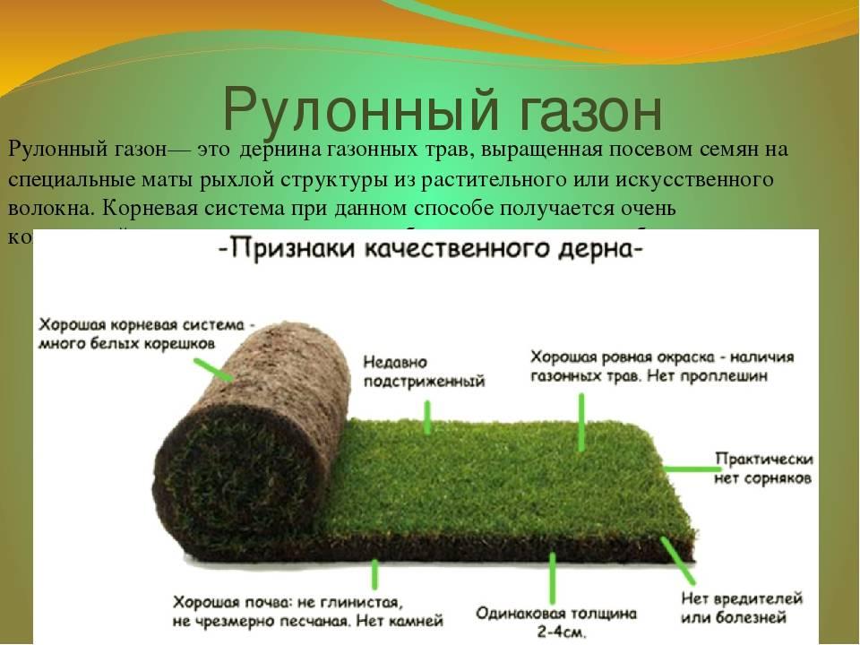 Искусственный газон на дачу: описание, виды, особенности укладки и дальнейшего ухода + преимущества и недостатки