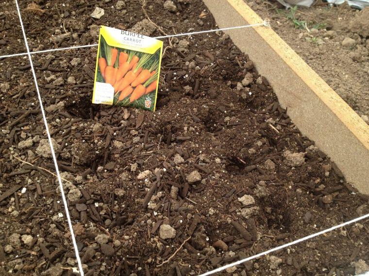 Посадка моркови семенами в открытый грунт весной: когда лучше, можно ли в конце мая, как происходит подготовка, как правильно сеять и на какую глубину, еще об уходе русский фермер