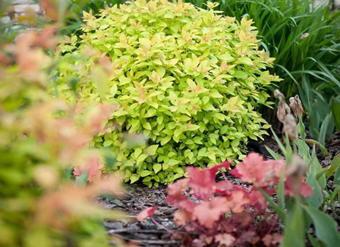 Садовый бордюр - как сделать идеальный бордюр на участке (95 фото-идей)