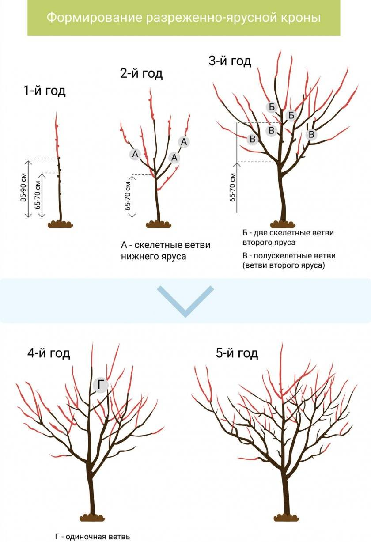 Обрезка молодых яблонь, когда и как лучше ее делать, в том числе для начинающих, а также особенности формирования кроны