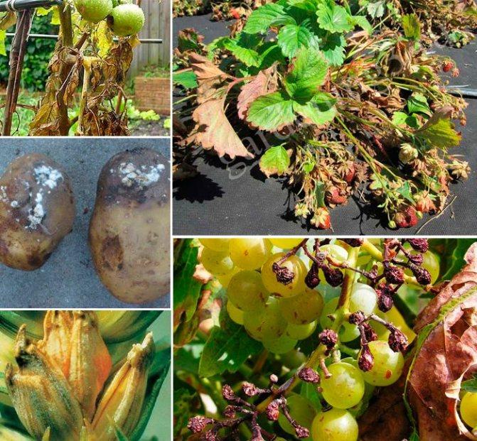 Лечение токсического гепатита лекарствами и народными средствами   компетентно о здоровье на ilive