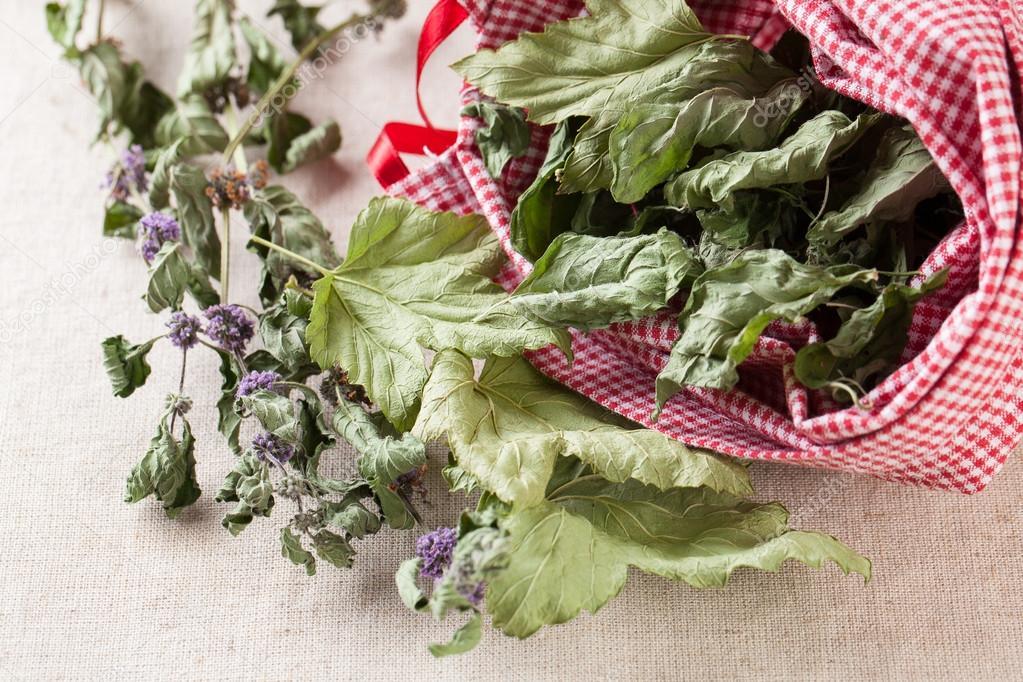 Как правильно сушить лист смородины на зиму