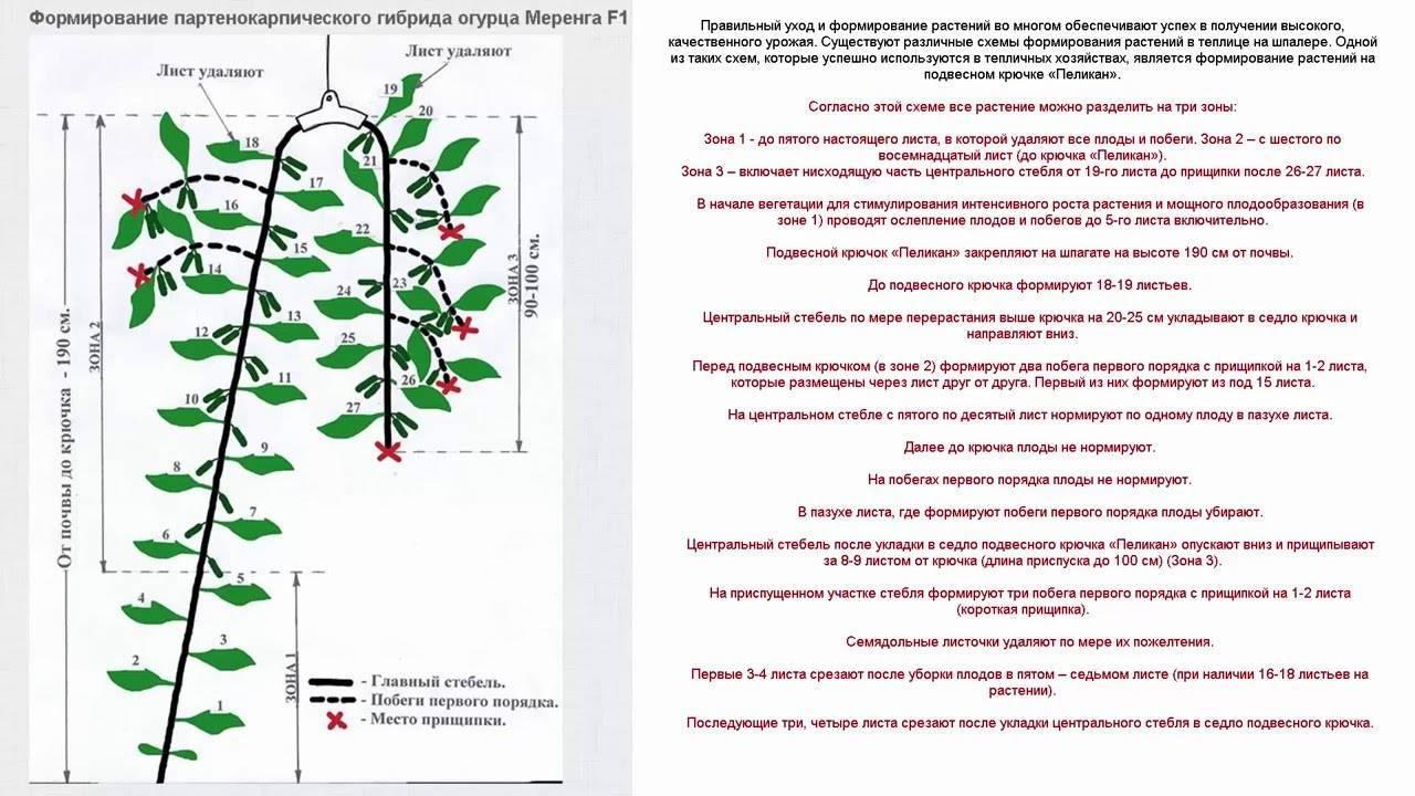 Как пасынковать огурцы: подробное описание прищипывания от мастеров с инструкцией (125 фото и видео)