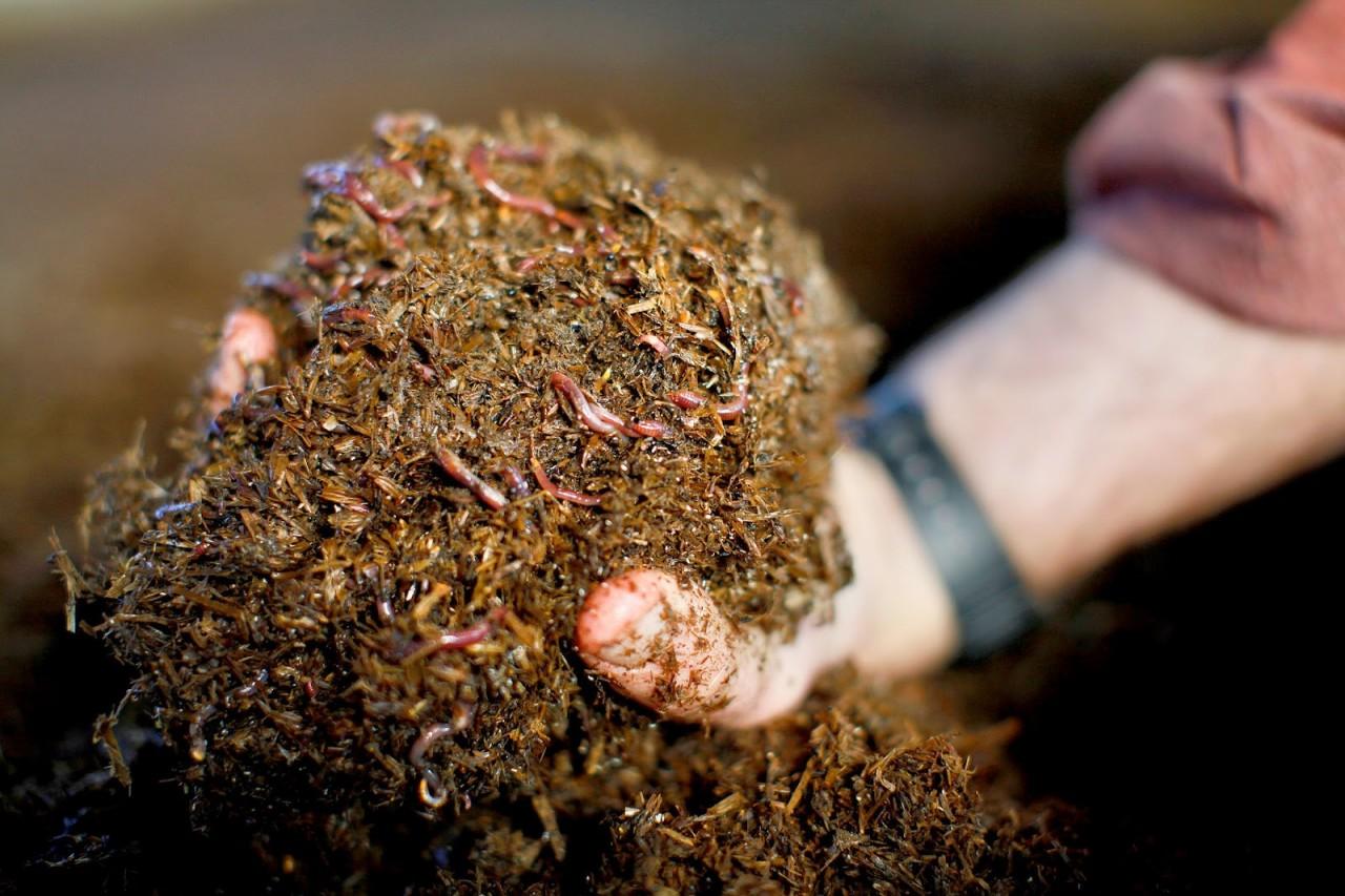 Как повысить плодородие почвы? топ-8 экологически безопасных вариантов +агротехнические методы | (фото & видео) +отзывы