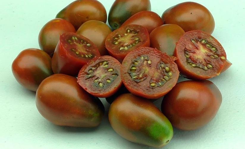 Замечательные черри с сладким вкусом — томат шоколадные пальчики f1: описание сорта и характеристики