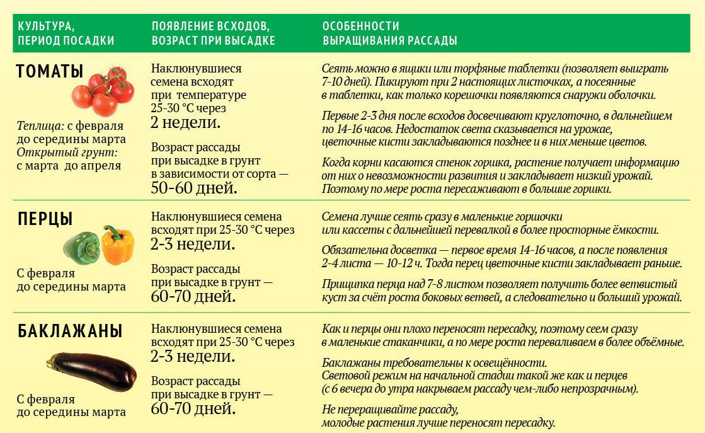 Посадка пророщенных семян помидоров: как осуществлять посев томатов, какое время для этого подходит, каковы возможные ошибки? русский фермер