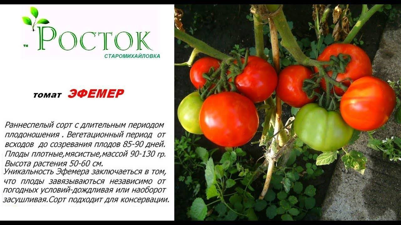 Описание томата Эфемер и его характеристика, особенности выращивания