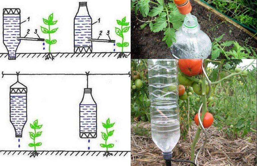 """Система """"капельный полив"""" из пластиковых бутылок своими руками: видео как правильно сделать"""
