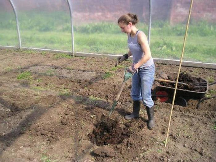 Требования к грунту для огурцов в теплице и правила его подготовки