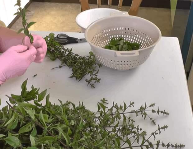Как сохранить мяту на зиму? рецепты заморозки, сушки и хранение в свежем виде