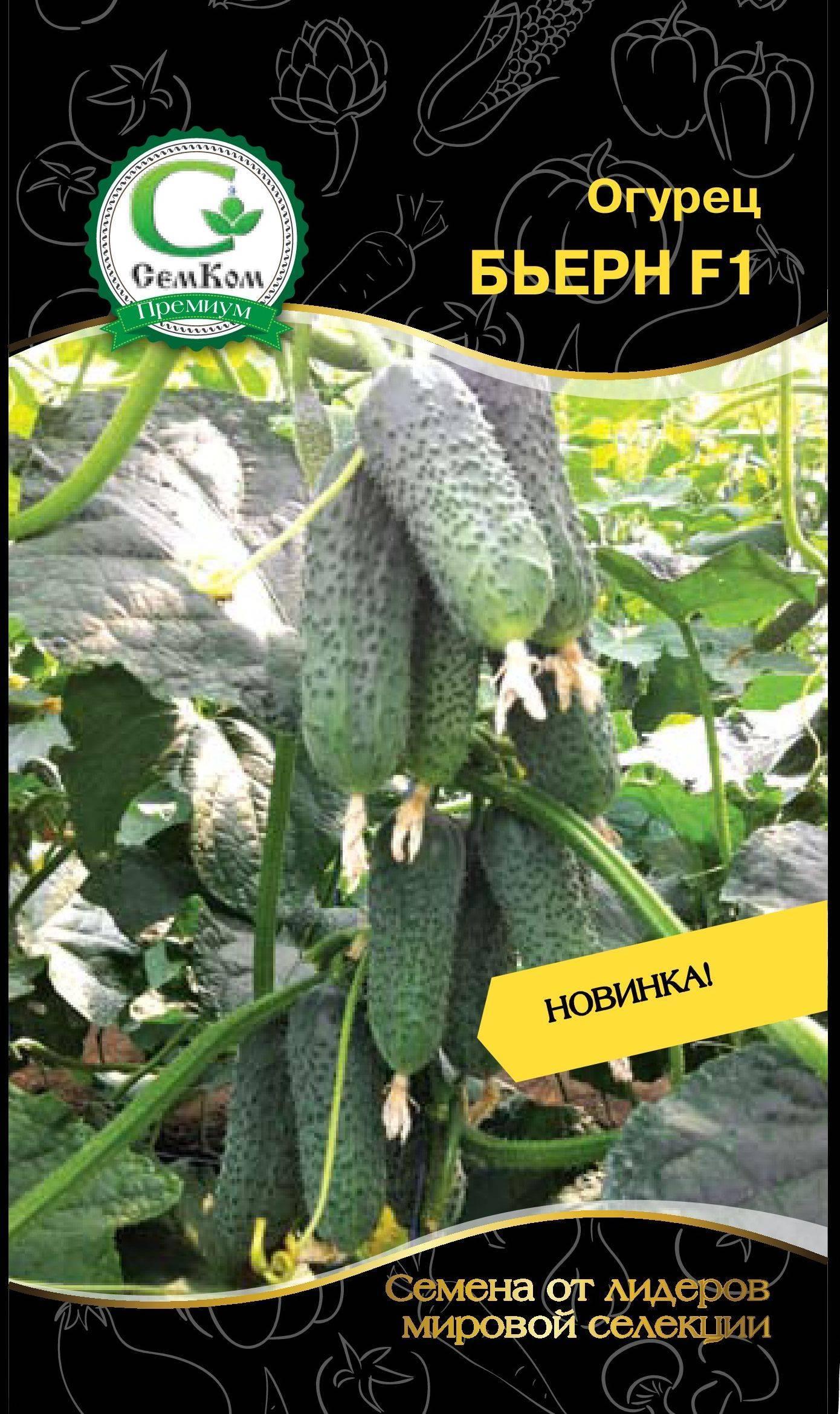 Огурец бьерн f1: описание сорта, отзывы, фото, урожайность