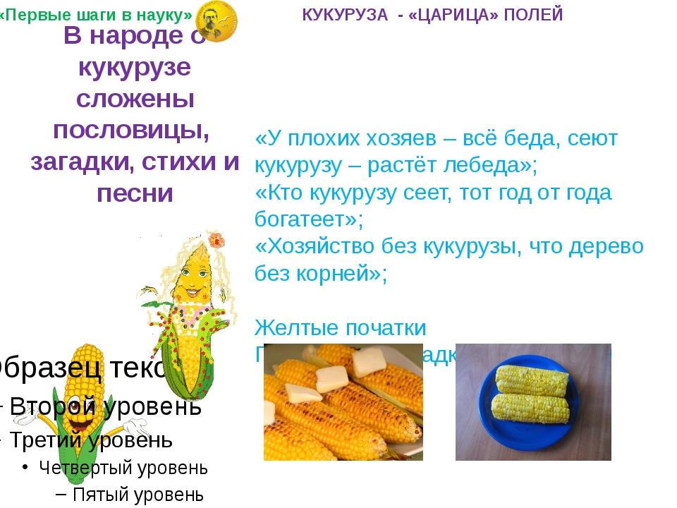 Вред и польза кукурузы   компетентно о здоровье на ilive