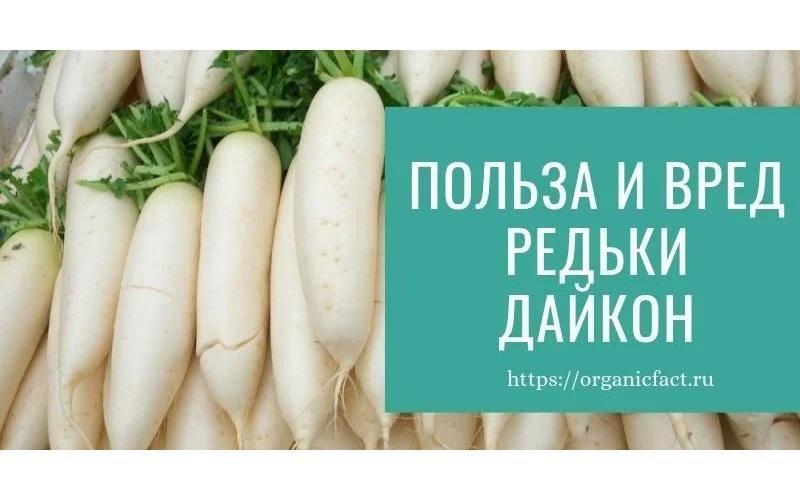 Полезные свойства и противопоказания дайкона: что это за белый овощ, в чем вред редьки для организма мужчин и женщин, каковы составы рецептов для здоровья человека?