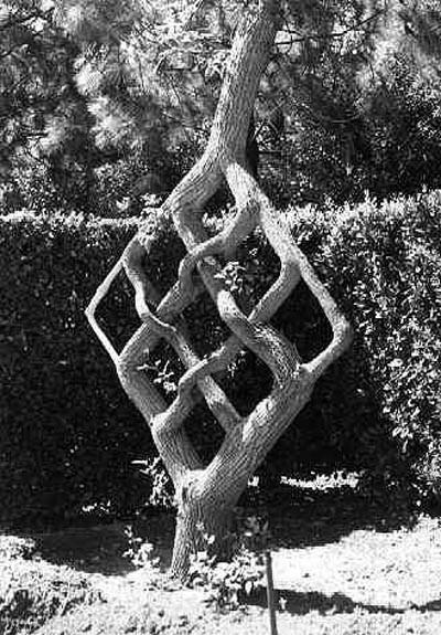 Арбоскульптура: история, принципы, алгоритм создания в саду