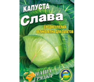Секреты популярности капусты слава. чем хорош этот сорт и как его отличить от других?