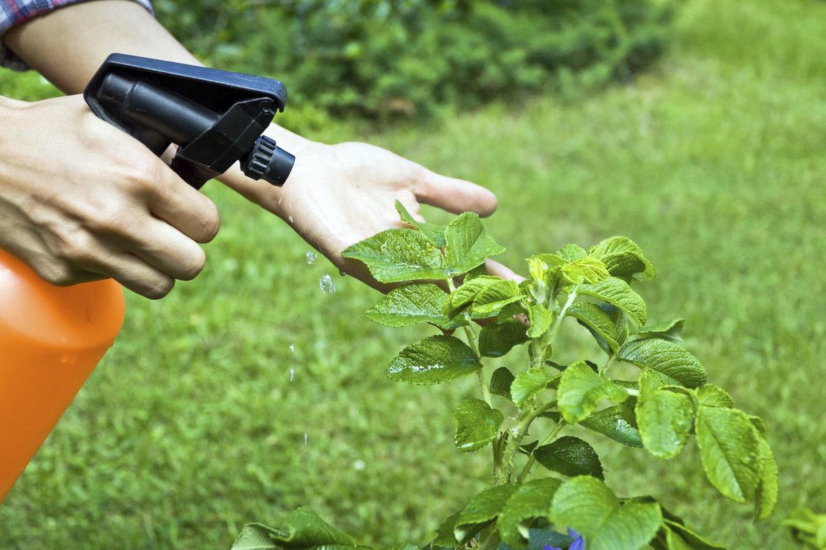 Правильное использование пестицидов для химического метода защиты растений от вредителей