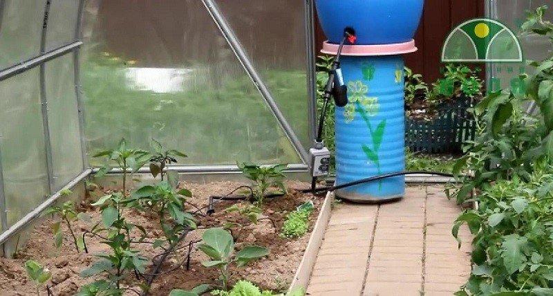 Капельный полив для теплицы: как сделать своими руками и какую систему лучше купить