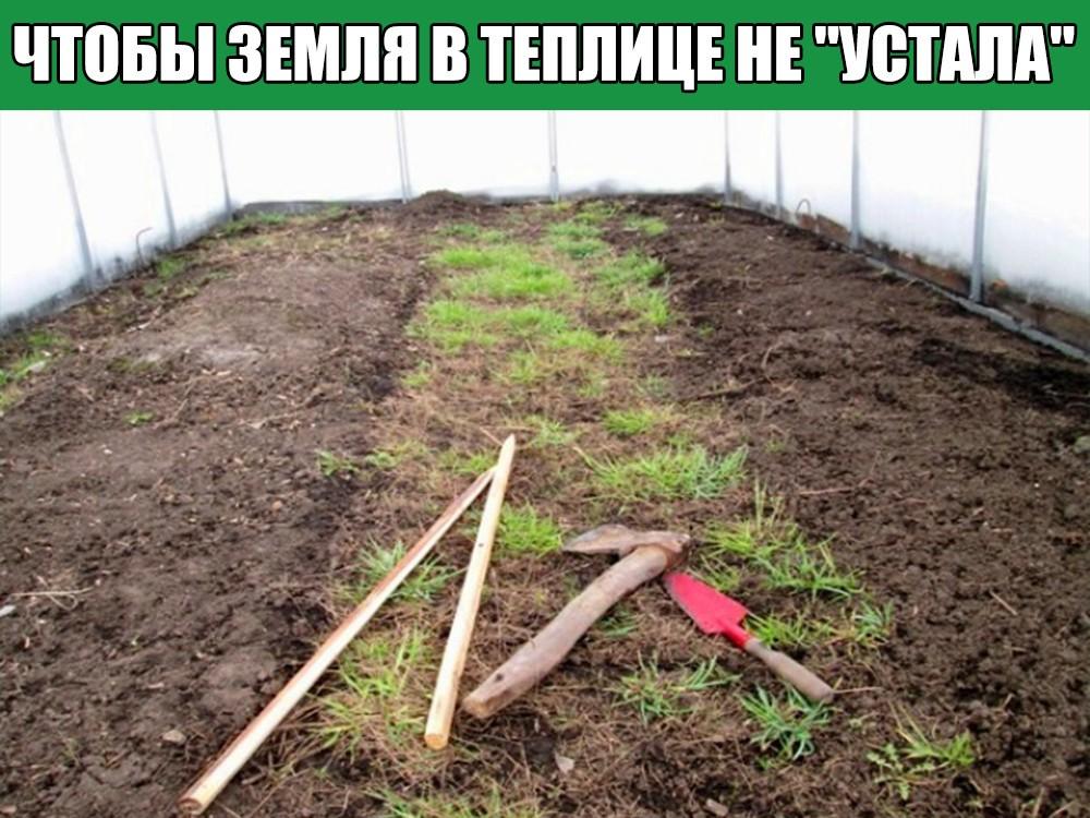 Подготовка грунта для огурцов в теплице весной: какую почву любят, чем и как обработать землю