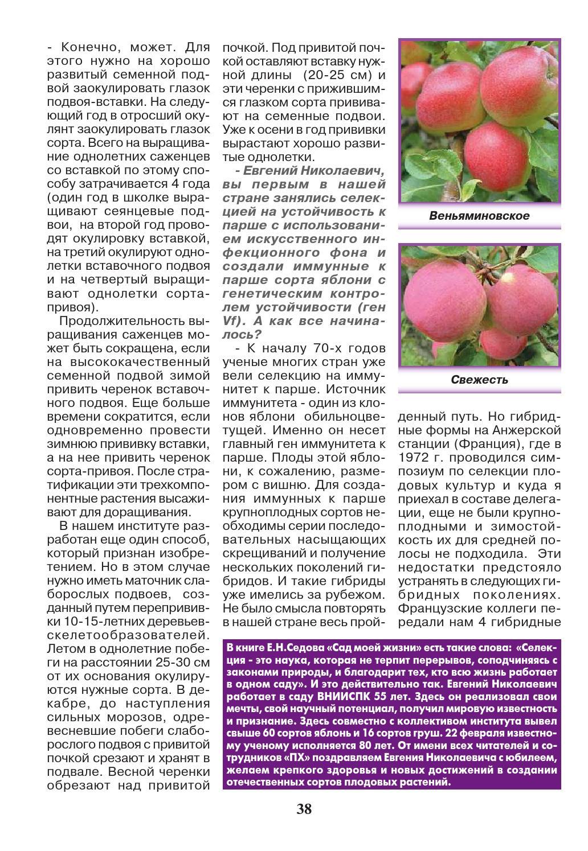 Описание яблони сорта Веньяминовское, посадка и уход