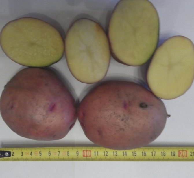Картофель журавинка: отзывы, фото, описание сорта, посадка и выращивание, подкормка, вкусовые качества