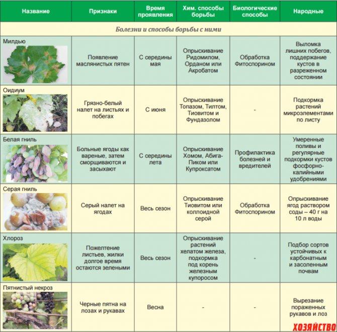 Полив молодых саженцев винограда- правила и рекомендации