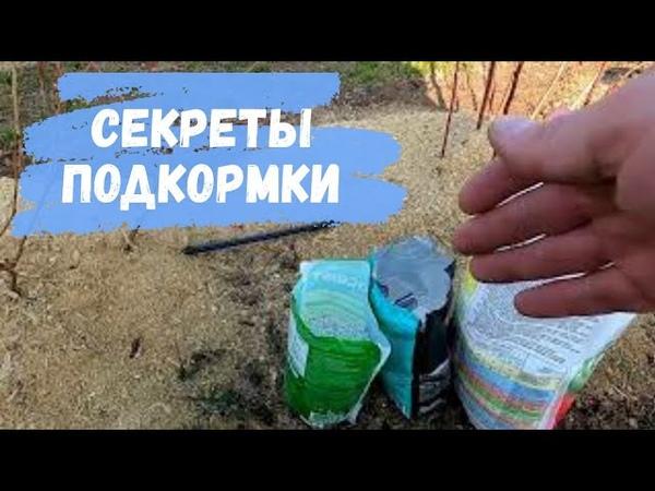 Удобрение для голубики садовой [что использовать и как вносить]
