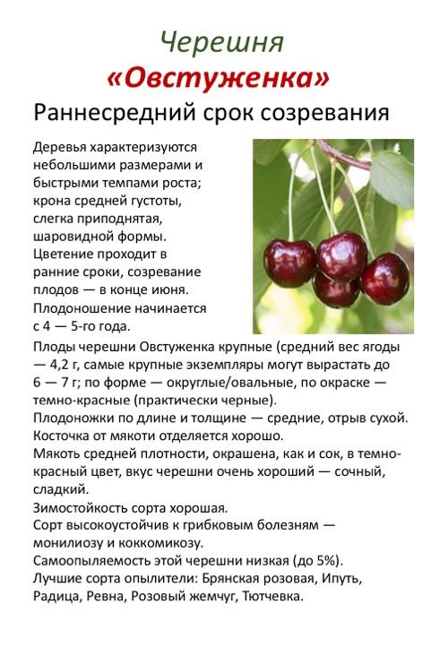 Черешня крупноплодная - советы садоводов по выращиванию черешни (110 фото)