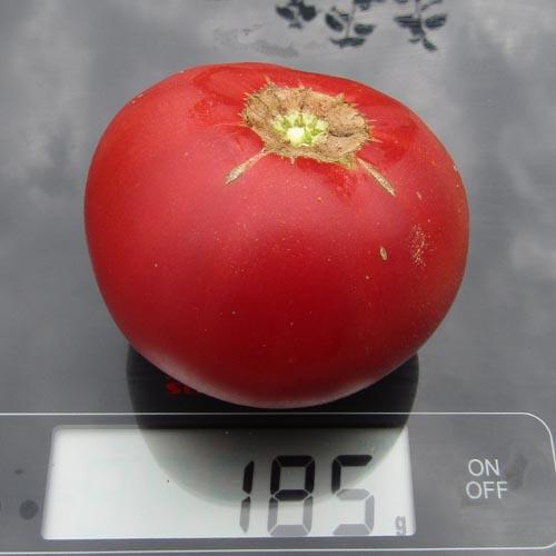 Простой в уходе и красивый томат — крымская роза: описание сорта и особенности выращивания