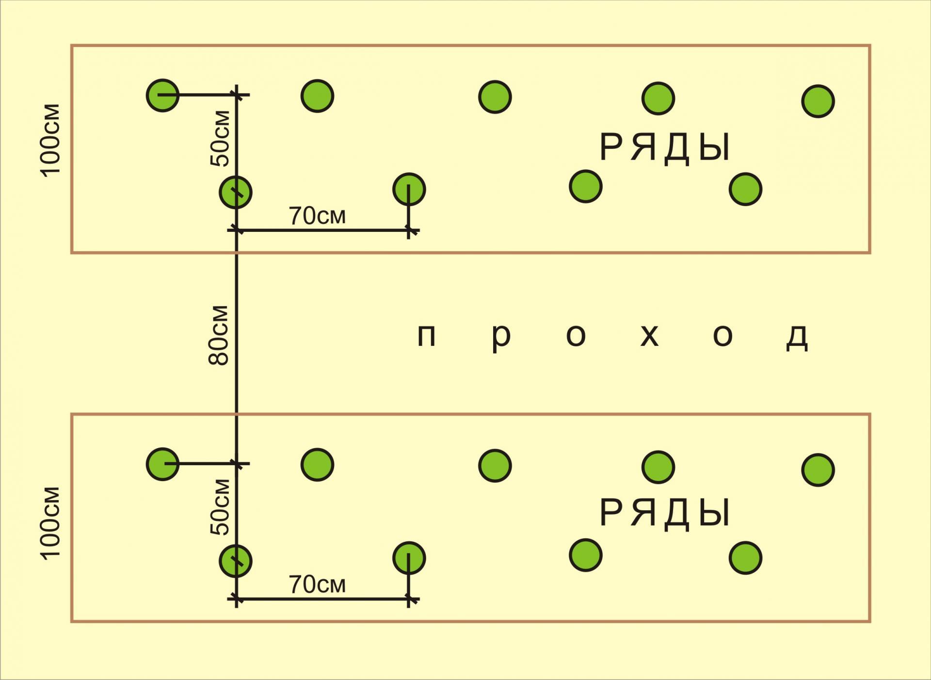 Посадка огурцов: в открытый грунт, схемы, сроки для средней полосы и способы рассаживания, на каком расстоянии лучше это делать, что положить в лунку