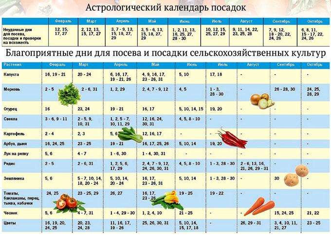 Благоприятные и неблагоприятные дни для посадки томатов по лунному календарю в 2021 году
