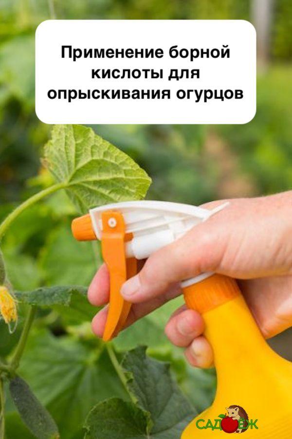 Как подкормить огурцы борной кислотой: дозировка, польза и вред