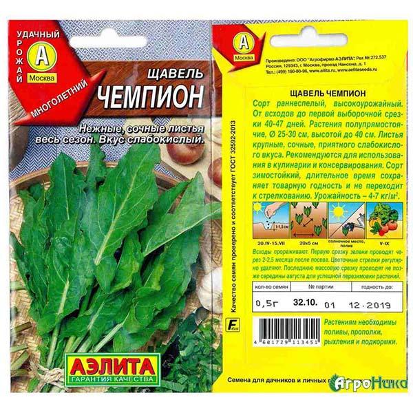 Щавель: посадка семенами и уход в открытом грунте, выращивание и размножение. сорта, фото, сочетание с другими растениями