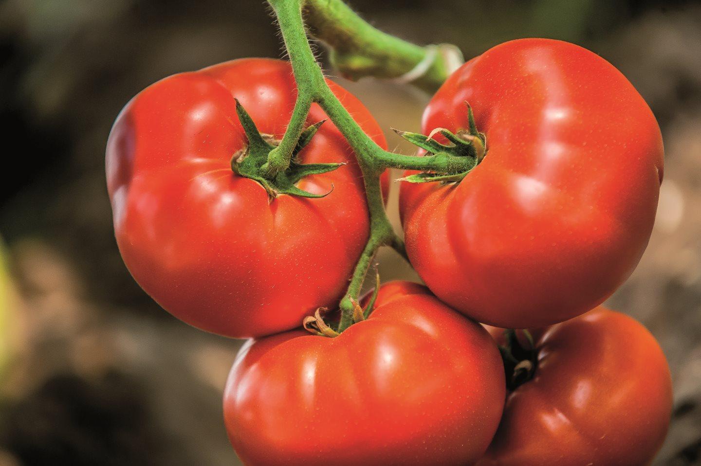 Томат биг биф: характеристика сорта, описание, отзывы, урожайность