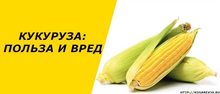 Чем полезна и вредна кукуруза : польза и вред для здоровья человека