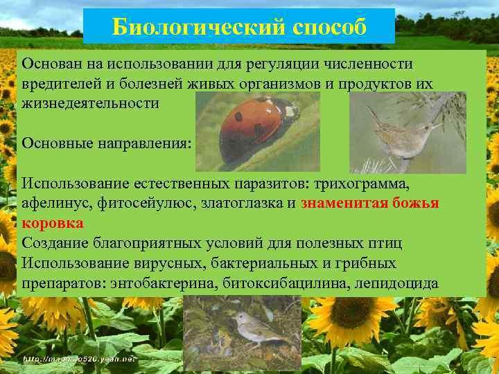 Основные рекомендации по борьбе с болезнями растений