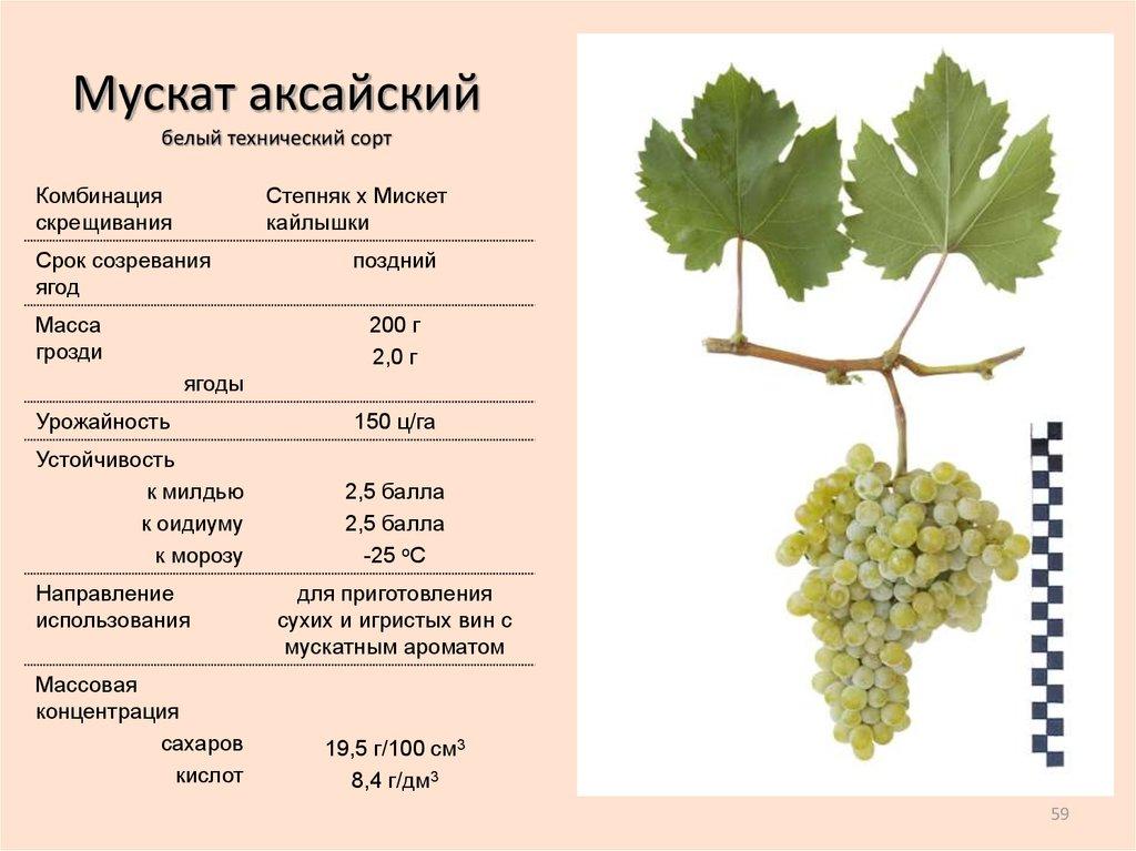 Виноград красотка: описание сорта с характеристикой и отзывами, особенности посадки и выращивания, фото
