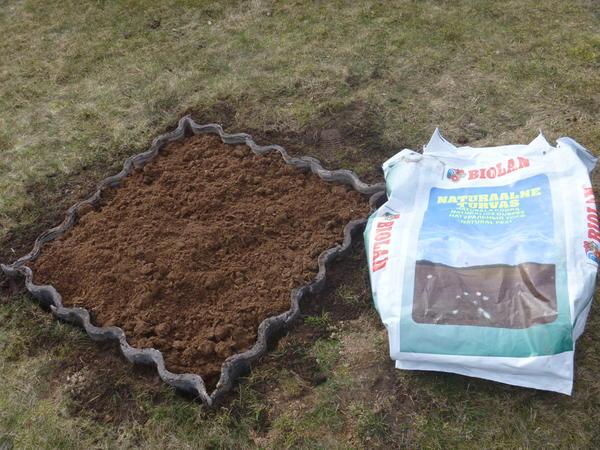 Почва для садовой голубики, как выбрать место для посадки