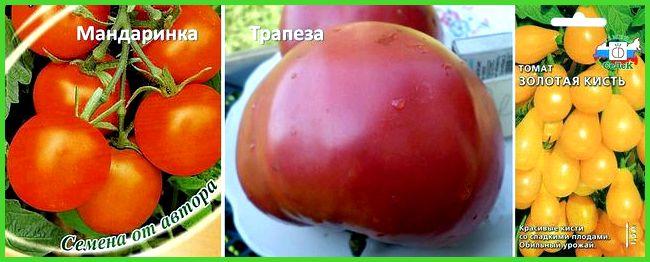 Топ-7 классических любимых томатов для теплиц в подмосковье