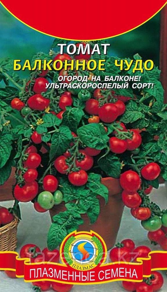 """Огурцы """"балконное чудо"""" - мой дом, моя семья - моя крепость. - страна мам"""