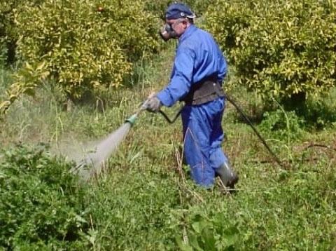 Ой, беда, в огороде лебеда. как избавиться от сорняков навсегда?   общество   аиф иркутск