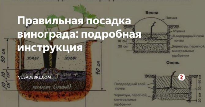 ᐉ как получить урожай винограда в год посадки - roza-zanoza.ru