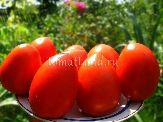 Томат огородник: характеристика и описание сорта, отзывы, урожайность, фото