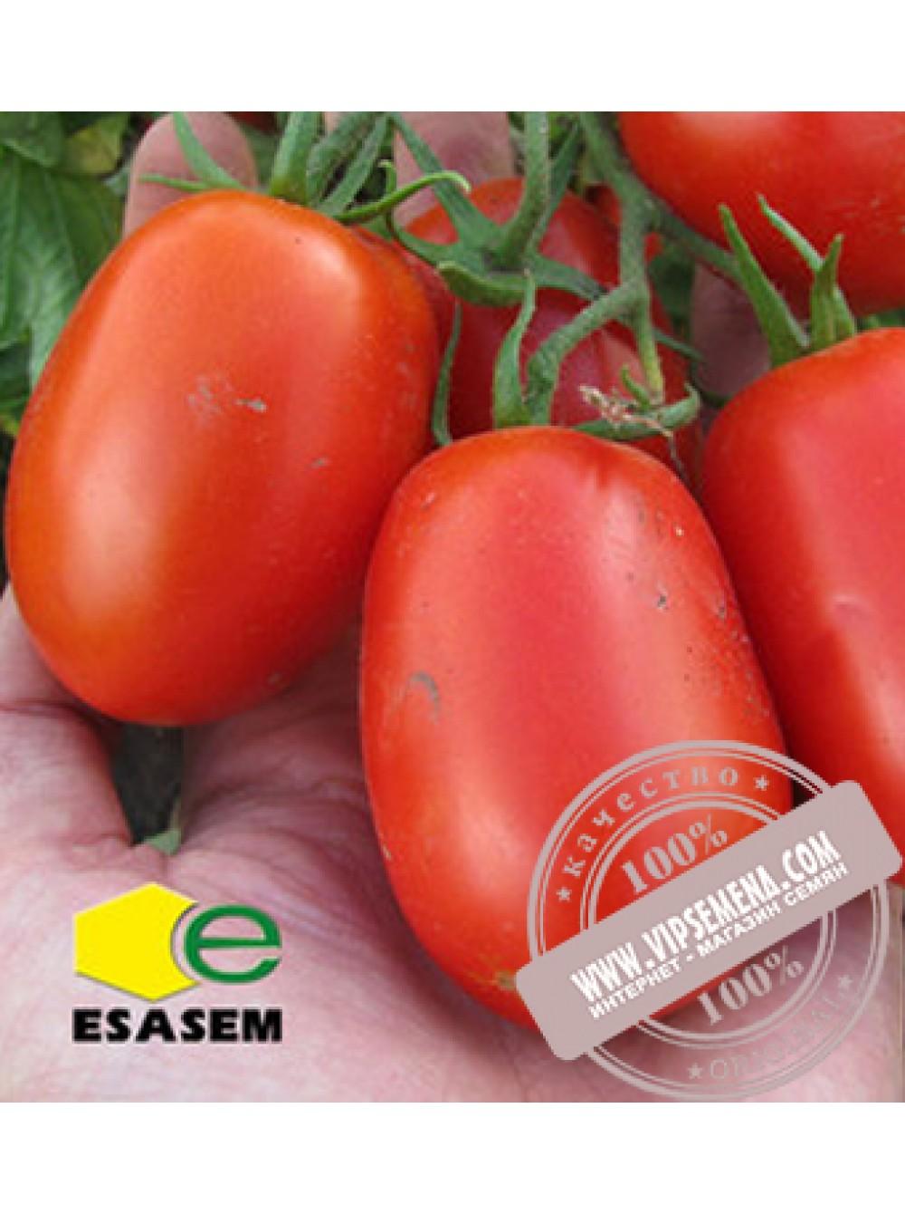 """Томат """"петруша огородник"""": характеристика и описание сорта помидор, фото, выращивание, созревание и уход русский фермер"""