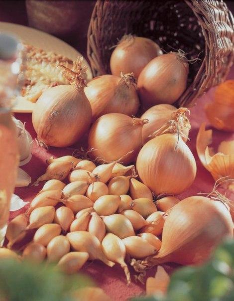 Лук шетана: описание и особенности выращивания сорта