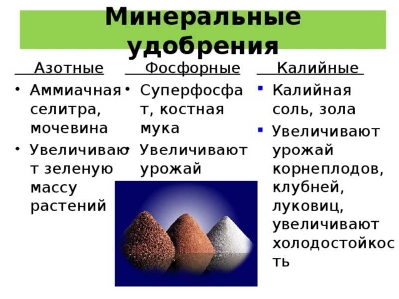 Минеральные удобрения: виды и характеристика