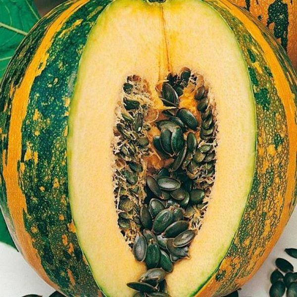 Сорта тыквы для открытого грунта с описанием и фотографиями видов