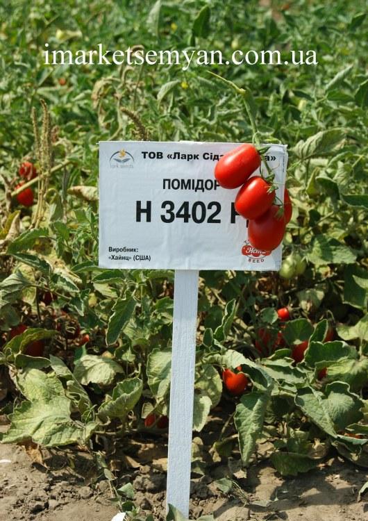 Что такое гибриды томатов и томаты f1, выбираем лучшие: советуют огородники на supersadovnik.ru