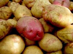 ᐉ сорт картофеля «иван да марья» – описание и фото - roza-zanoza.ru