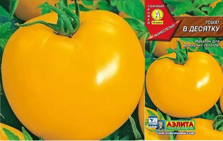 Томат батяня: описание и характеристика сорта, фото, отзывы, урожайность, видео, выращивание