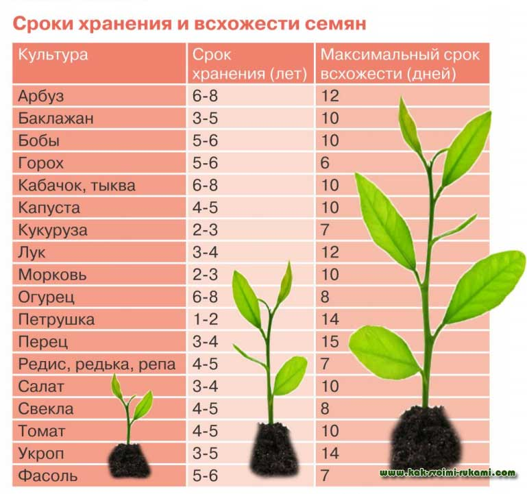 Как определить всхожесть семян? фото — ботаничка.ru
